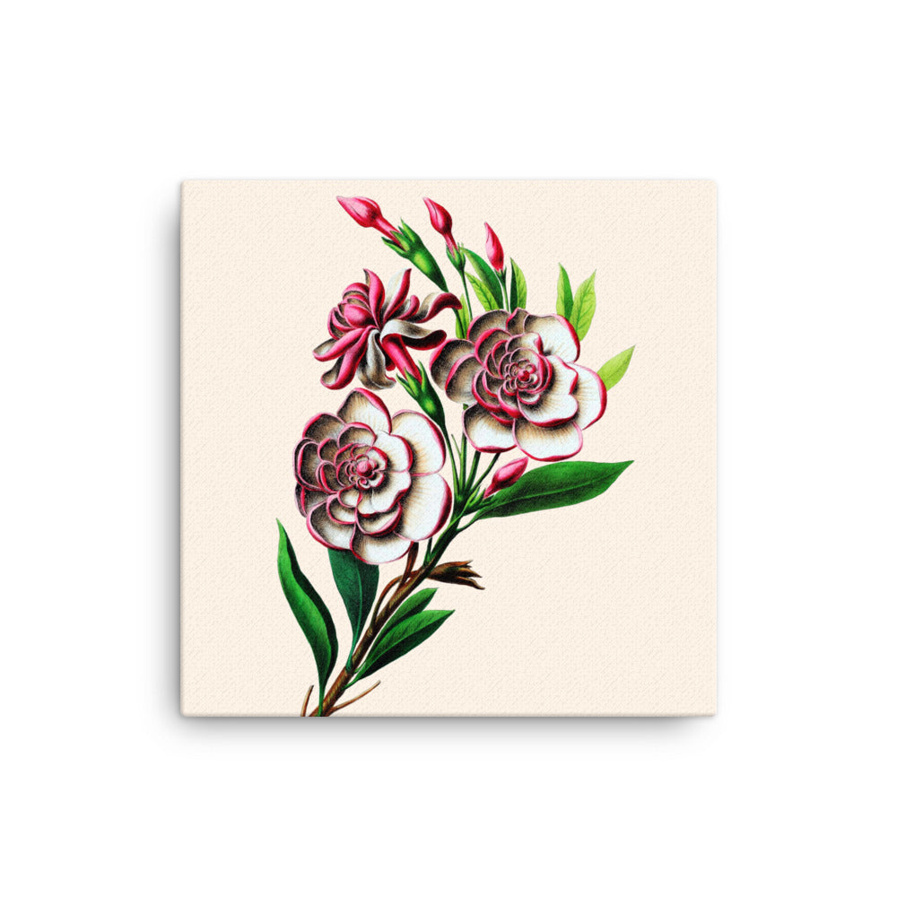 Gardenia Botanical Illustration Canvas