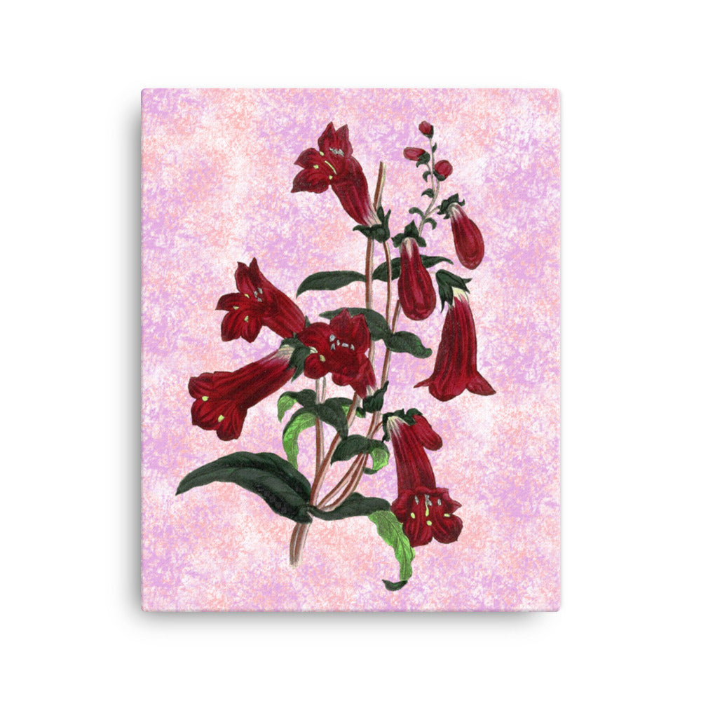 Gentian Beardtongue | Penstemon Gentianoides | Botanical Illustration | Canvas Print