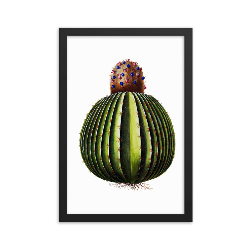 Melon Cactus | Melocactus Spp. | Botanical Illustration | Framed poster
