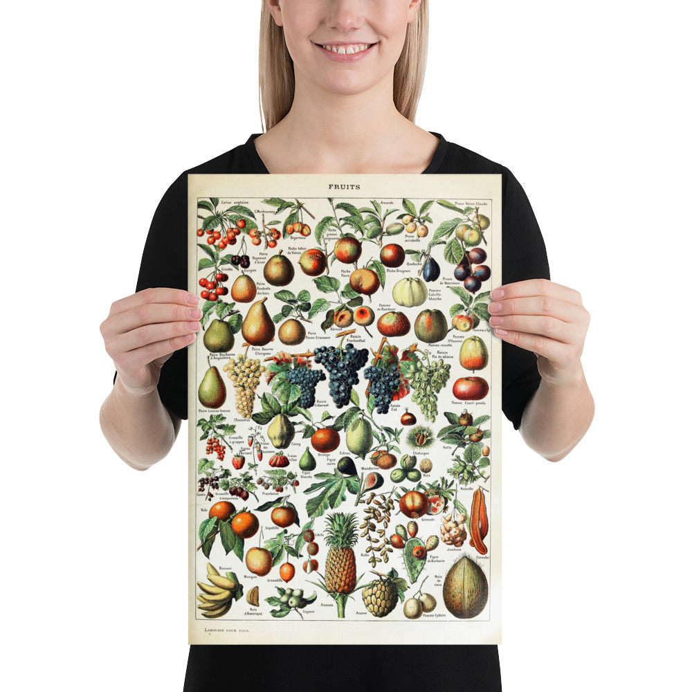 various fruit botanical print 12x18