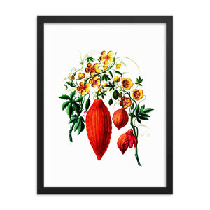 Momordica charantia Botanical Illustration Framed poster