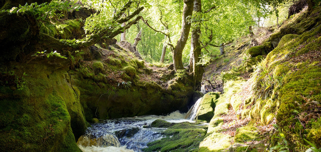 Image of river flowing in green forest