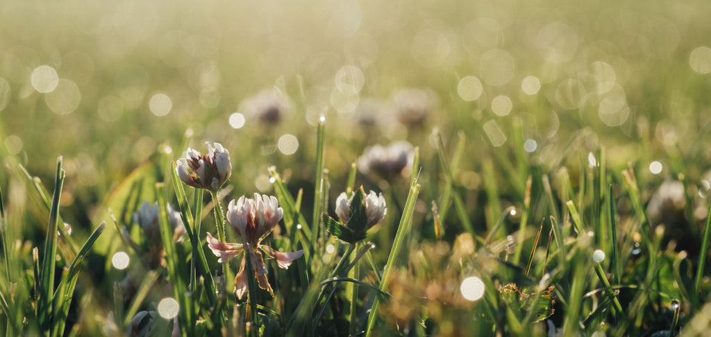 Closeup image of green grass in the morning