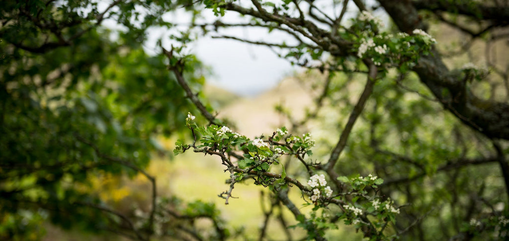 Close-up image of tree branch with green leaves in forest