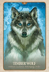 The Secret Language of Animals Oracle Cards