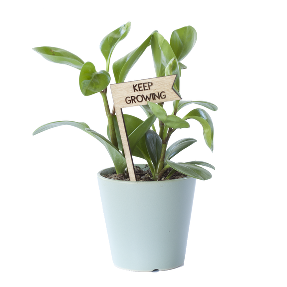 Savvie Studio - Plant Pick - Keep Growing