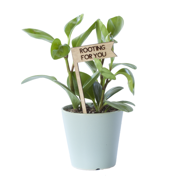 Savvie Studio - Plant Pick - Rooting For You