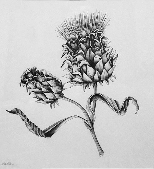 Artichoke Original Pen and Ink Drawing
