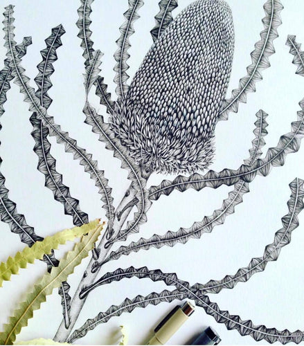 Banksia Victoriae Original Pen and Ink Drawing
