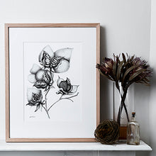 Cotton Limited Edition Print
