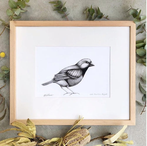 Black Throated Finch Original Pen and Ink Drawing