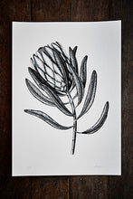 Protea Limited Edition Print