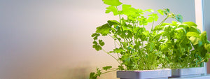 urban-plant-growers-indoor-smart-garden-basil-and-parsley-grow-kit