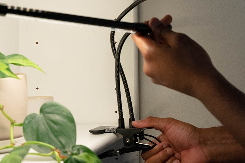 clip of hydroponic led grow light attached to shelf and man moving lights to reach plants