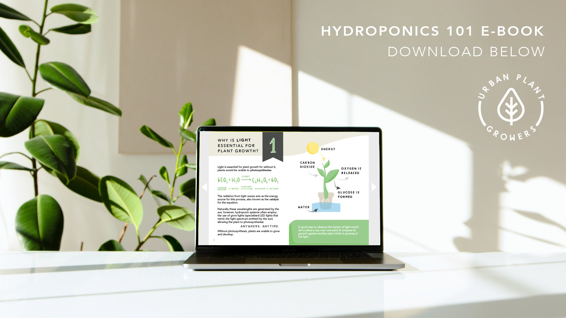 laptop viewing the hydroponics 101 e-book