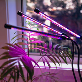 purple hydroponic led light growing indoor plants in apartment