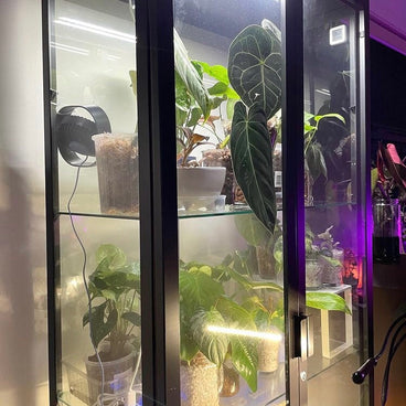 repost white full spectrum hydroponic grow lights indoor plants in cabinet