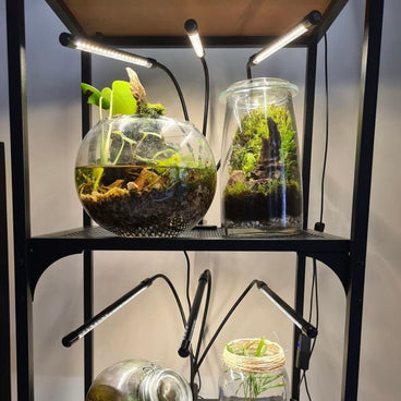 Repost white hydroponic grow lights growing terrariums and aquascapes on shelf