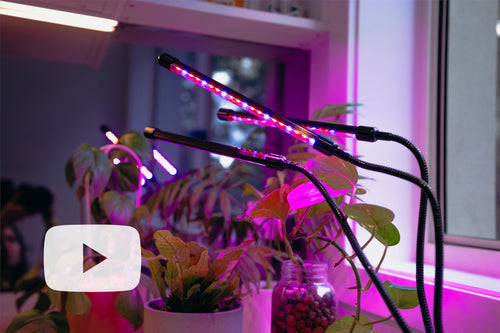 Best features of purple hydroponic led light growing indoor plants in kitchen