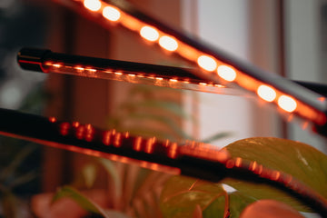 Custom light settings, red hydroponic led light growing indoor plants