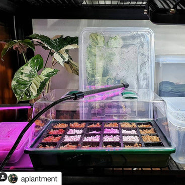 @aplantment repost purple hydroponic grow light germinating seedlings apartment