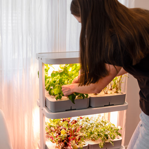 Woman picking herbs from hydroponic vertical garden