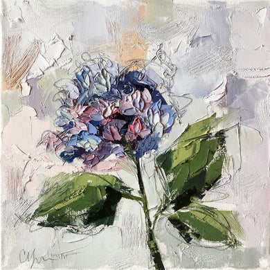 """Hydrangea X"" 12x12 Oil/Graphite on Canvas"