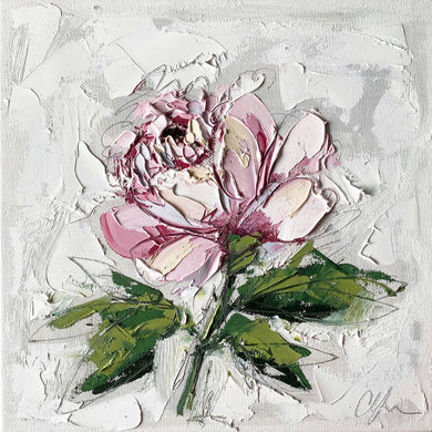 """French Peony I"" 12x12 Oil on Canvas"
