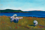 Beautiful pastel print greeting card featuring a coastal Maine scene with multiple sheep and a Shepard | Salt Air Supply