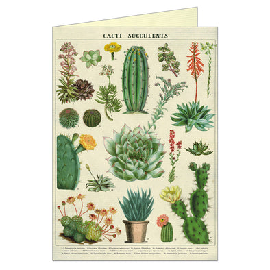 Cavallini  & Co. Greeting Card Succulents