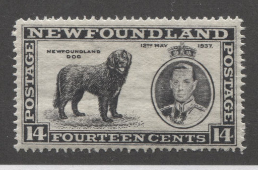 Newfoundand #238vii 14c Black 1937 Long Coronation Issue Position 30 Major Re-Entry VFOG, Perf. 14.25 Line