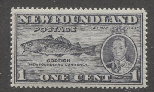 Newfoundland #233 (SG#257) 1c Grey Blk 1937 Long Coronation Guideline in Margin VF-80 NH Brixton Chrome