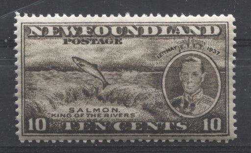 Newfoundland #237 (SG#261b) 10c Brownish Black 1937 Long Coronation Perf. 13.9 VF-75 NH Brixton Chrome
