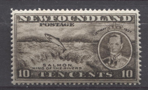 Newfoundland #237 (SG#261b) 10c Brownish Blk 1937 Long Coronation Perf. 13.8 x 13.9 VF-84 NH Brixton Chrome