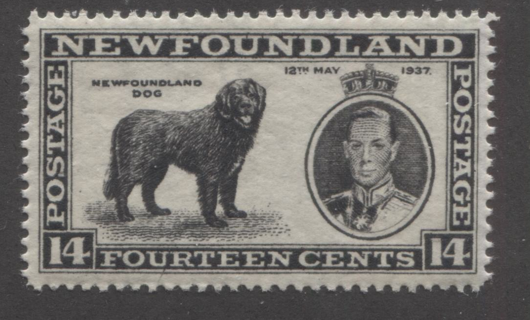 Newfoundland #238 14c Black Newfoundland Dog, 1937 Long Coronation Issue, A Very Fine NH Example of the Line Perf. 14.2 x 14.25 Brixton Chrome