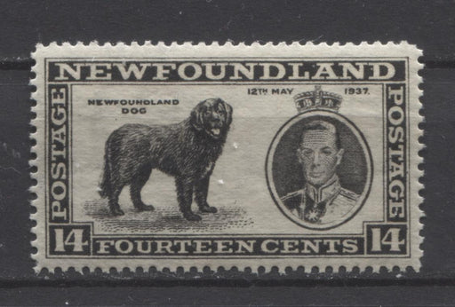 Newfoundland #238 (SG#262) 14c Black 1937 Long Coronation Perf. 14.25 VF-75 NH Brixton Chrome