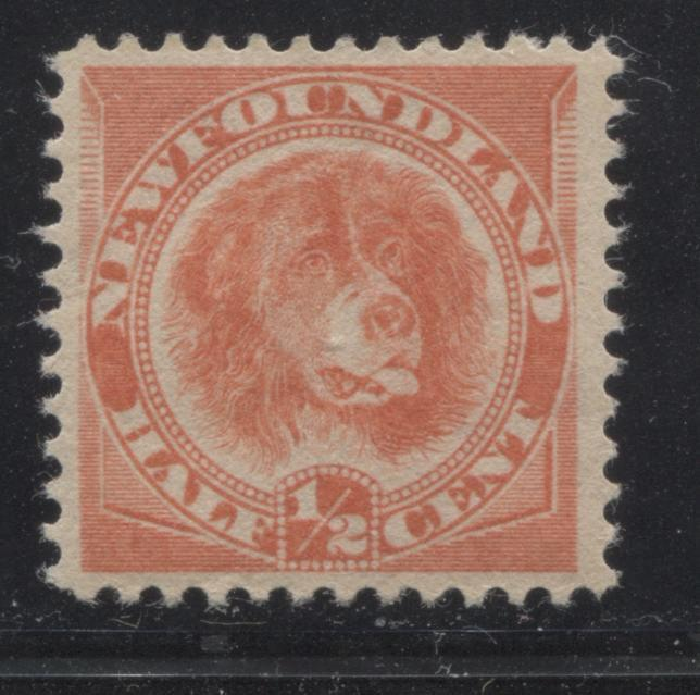 shopify auction Brixton Chrome Newfoundland #56 1/2c Orange Red Newfoundland Dog, 1880-1896 Third Cents Issue, A Very Fine OG Example of the Scarce Reissue-145648-88857