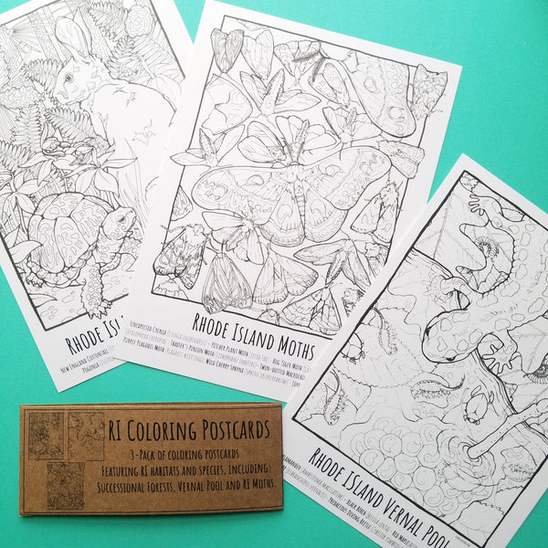 Set of 3 Coloring Page Postcards