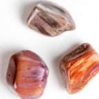 Petrified Wood Stone