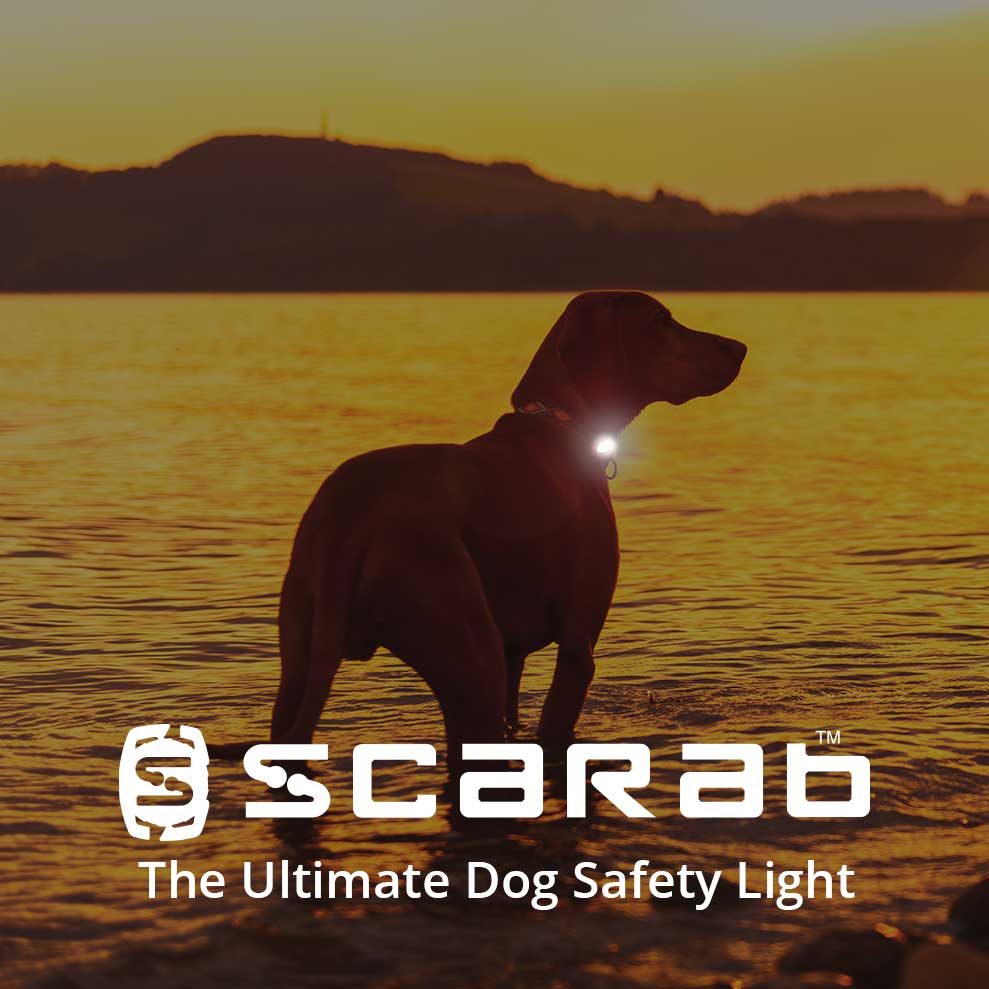 Scarab Trio - Rechargeable Dog Safety Light