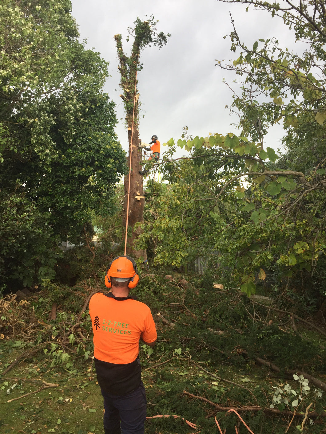 Two Hours of Tree  Work from  Arborist & Ground Labourer