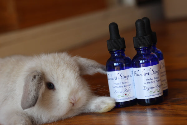 Herbal Tonics for Healthy Bunnies