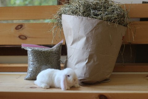 holland lops nj, mini lops nj, pet bunny nj, bunnies nj, bunnies ny, holland lop ny, mini lop ny, holland lops, mini lops, pet bunnies, bunny supplies, rabbit nj, rabbit pa, rabbit ny, miniature lamancha, nigerian dwarf nj, mini goat nj