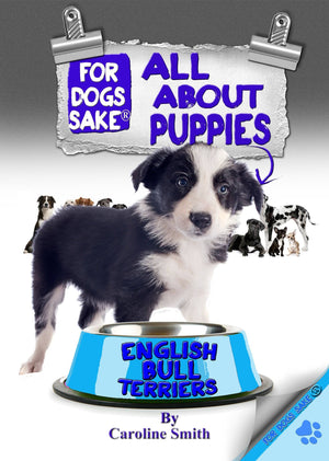 For Dogs Sake! Download Default Title All About Border Collie Puppies