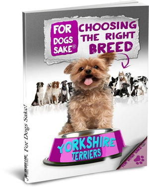 For Dogs Sake! Download Default Title Choose The Right Yorkshire Terrier