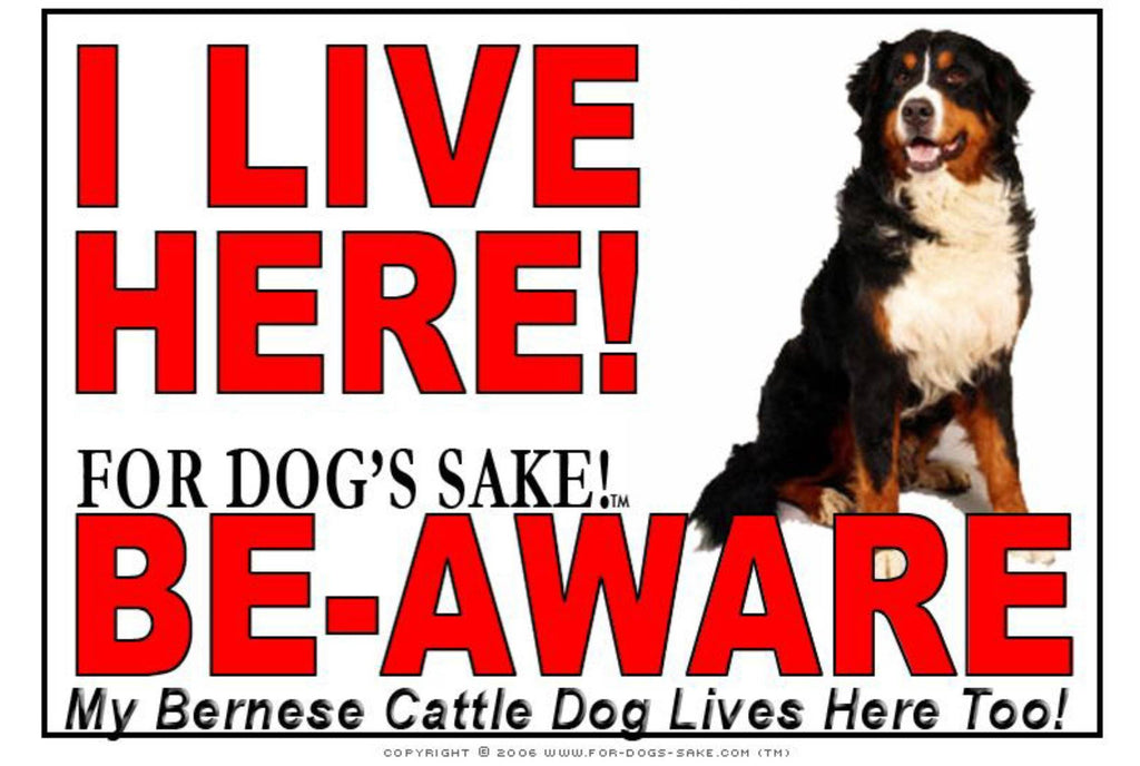 For Dogs Sake! Image1 / Adhesive Vinyl Bernese Cattle Dog I Live Here Sign