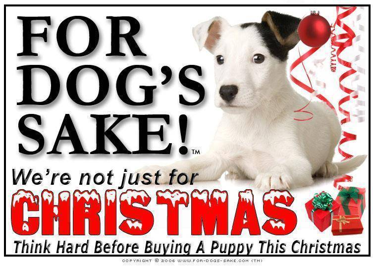 For Dogs Sake! Download Default Title Jack Russell Terrier Christmas Message (Download)