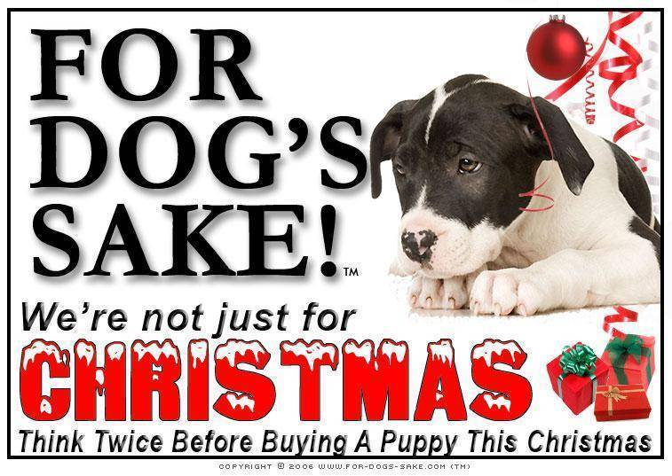 For Dogs Sake! Download Default Title Staffordshire Bull Terrier Christmas Message (Download)
