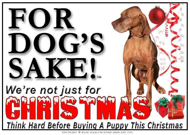 For Dogs Sake! Download Default Title Vizsla Christmas Message (Download)