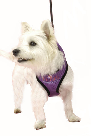For Dogs Sake! Waffle Dog Harness and Lead in Red/Black/Pink/Purple & Baby Blue